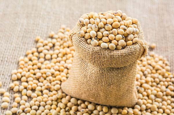 Soybean-to-increase-height