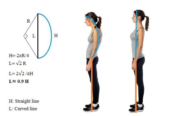 poor-posture-reduces-height
